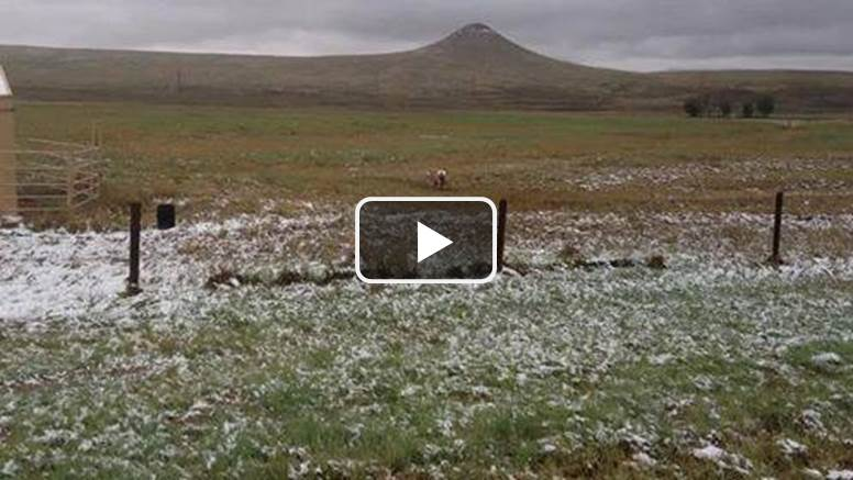 Dueling Pronghorn 10-1-2013