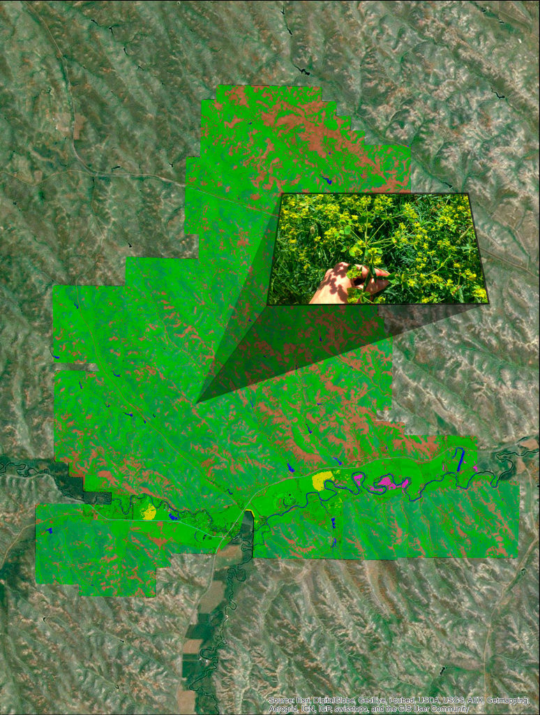 These tools can help a land manager rapidly scan very large land areas to pinpoint potential zones of problematic vegetation.