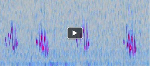Spectrogram (plot of frequency vs. time) of a western meadowlark (Sturnella neglecta).