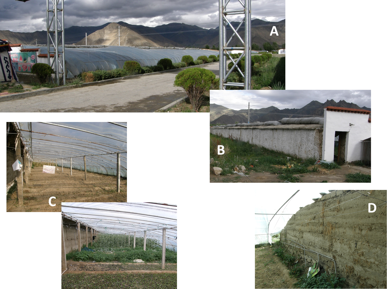 A: Front view of a Tibetan greenhouse; B: A view from the back side with the plastic rolled up; C: Two views from the inside. Note the sod wall on rear (North) side of the structure; D: A side, buttress wall, also made of sod. These walls could also be made of cement blocks.